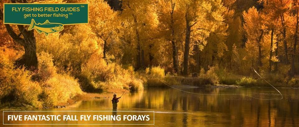 Fall Fly Fishing Forays