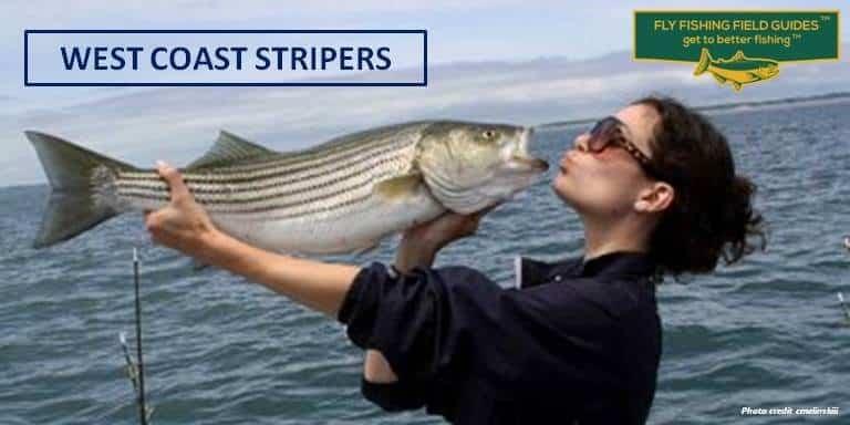 west coast stripers