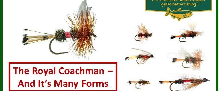 royal coachman fly