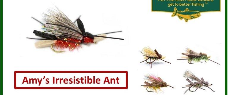 Amy's Ant