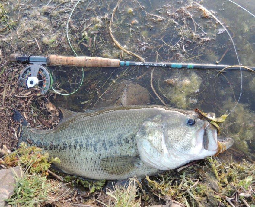 bass fly rod
